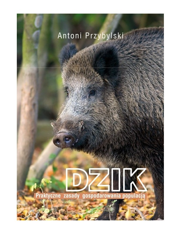 Dzik Antoni Przybylski